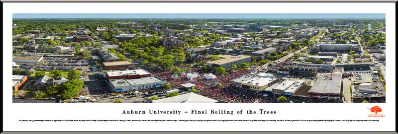 College - Auburn Tigers - Final Rolling of the Trees - Framed Picture